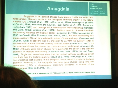 AmygdalaAPA